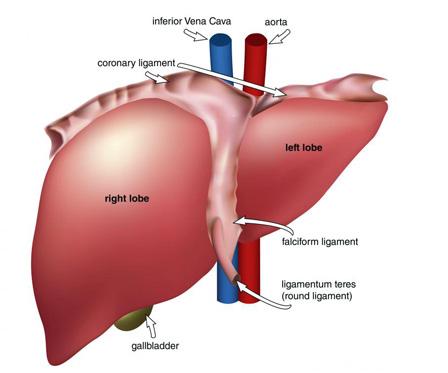 Bệnh gan ảnh hưởng đến làn da 1
